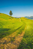 Road through Carpathian — Stock Photo