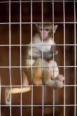 Llittle chimpanzee in  zoo — Stock Photo