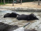 Malaysia Elephant at the Lok Kawi Wild Life Park — Stock Photo