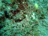 Eel underwater — Stock Photo