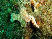 Nudibranchs — Stock Photo