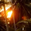 Closeup image of red sunset in tropics viewed through palm tree — Stock Photo #73827413