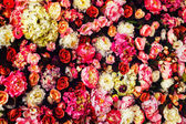 Closeup image of beautiful flowers wall background with amazing red and white roses. — Stock Photo