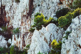Picturesque landcape of white rocks with green plants and few birds from high above. — Stock Photo