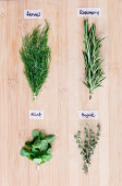 Overhead view of fresh herbs with names — Stock Photo