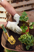 Man  transplanting and potting plants — Stock Photo