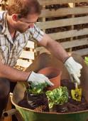 Man transplanting and potting plants — Stock Photo