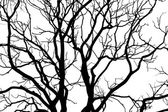 The black silhouette of the tree — Stock Photo