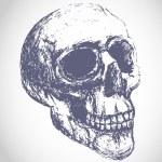 Scary human skull — Stock Vector #64579591
