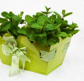 Mint in a metal pot — Stock Photo