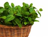 Mint in a basket — Stock Photo