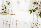 Blossom with card — Stock Photo