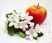 Apple and apple tree blossoms — Stock Photo