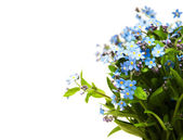 Forget-me-nots flowers — Stock Photo