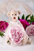 Teddy bear Ballerina — Stock Photo