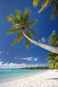 Dominican Republic, Beach on Saona island — Stock Photo