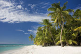 Dominican Republic, Beach on Saona island — Stock Photo