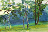 Summer landscape with birch — Stock Photo