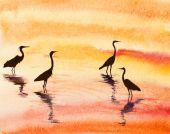 Heron i vattnet — Stockfoto