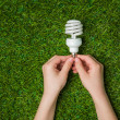 Hands holding  energy saving eco lamp over grass — Stock Photo #70614727