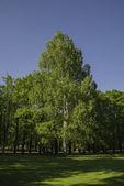 Pavlovsk park, landscape — Stock Photo