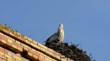 Stork in a nest, Jerez de la Frontera — Stock Video