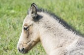Head foal in freedom — Foto de Stock