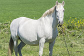 White horse in the countryside — Stockfoto
