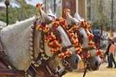 Horses decked in fair, Jerez de la Frontera — Stock Photo