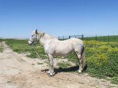 Grey horse in field — Stock Photo