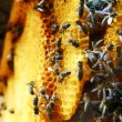 Working bees on honeycomb (4K) — Stock Video #69639221