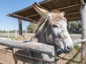 Donkey on a farm — Stock Photo