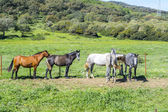 Herd of horses in a meadow — Stock Photo