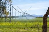 Industrial irrigation of crops — Stock Photo
