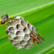 Wasp building a nest in a palm leaf (4K) — Stock Video #73075005