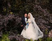 Beautiful wedding  — Stock Photo