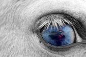 摄影师的眼睛 — 图库照片