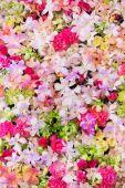 Fond de belles fleurs pour la scène du mariage — Photo
