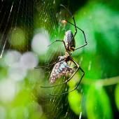 クモを食べる蛾. — ストック写真