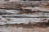 Textura de madeira antiga — Fotografia Stock