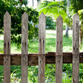 Old wood house buried in white flowers with fencing wood in fore — Stock Photo