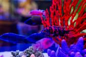 Colorful fish in aquarium saltwater world  — Stock Photo