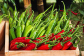 Fresh harvested sweet peppers different varieties — Stock Photo