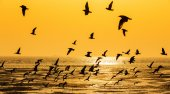 Tranquil scene with seagull flying at sunset — Stock Photo