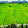 Aerial view of a green rural area under blue sky — Stock Photo #65130453