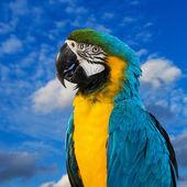 Modrá a žlutá macaw sedí na log — Stock fotografie