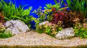 Aquascaping of the beautiful planted tropical freshwater aquariu — Stock Photo
