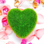 Green heart on a pink rose quickly. — Stock Photo