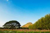 Cosmos flowers fields — Stock Photo