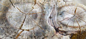 Pattern on the trunk sawn wood — Stock Photo